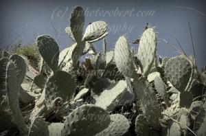 Cacti 03