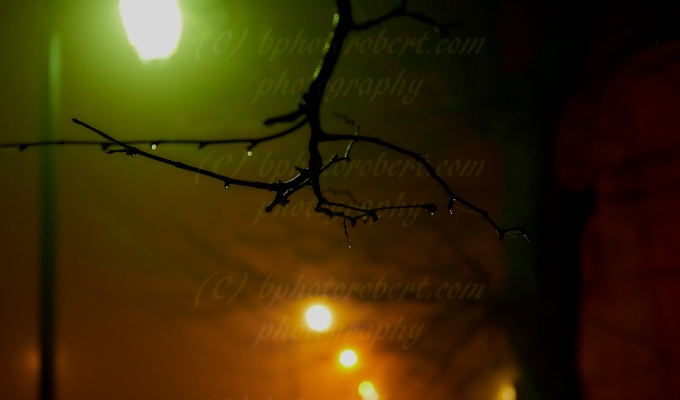 The Lights in the Fog…