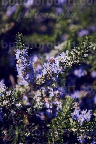 4 Seasons: WINTER – city nature –february