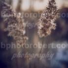 4-Seasons