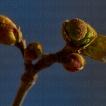 Catching Spring